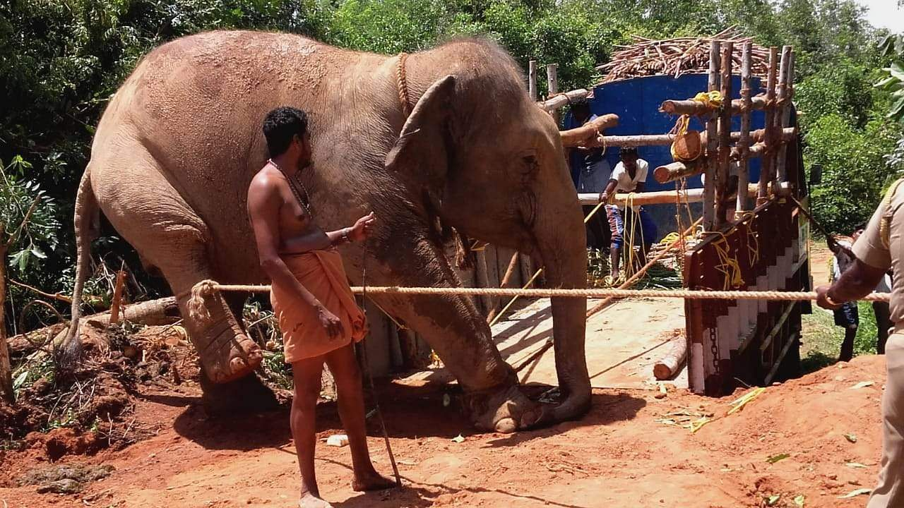 Authorities used force, heavy machinery and bullhooks allegedly to gain control over the jumbos before loading them on to the specially designed vehicles.