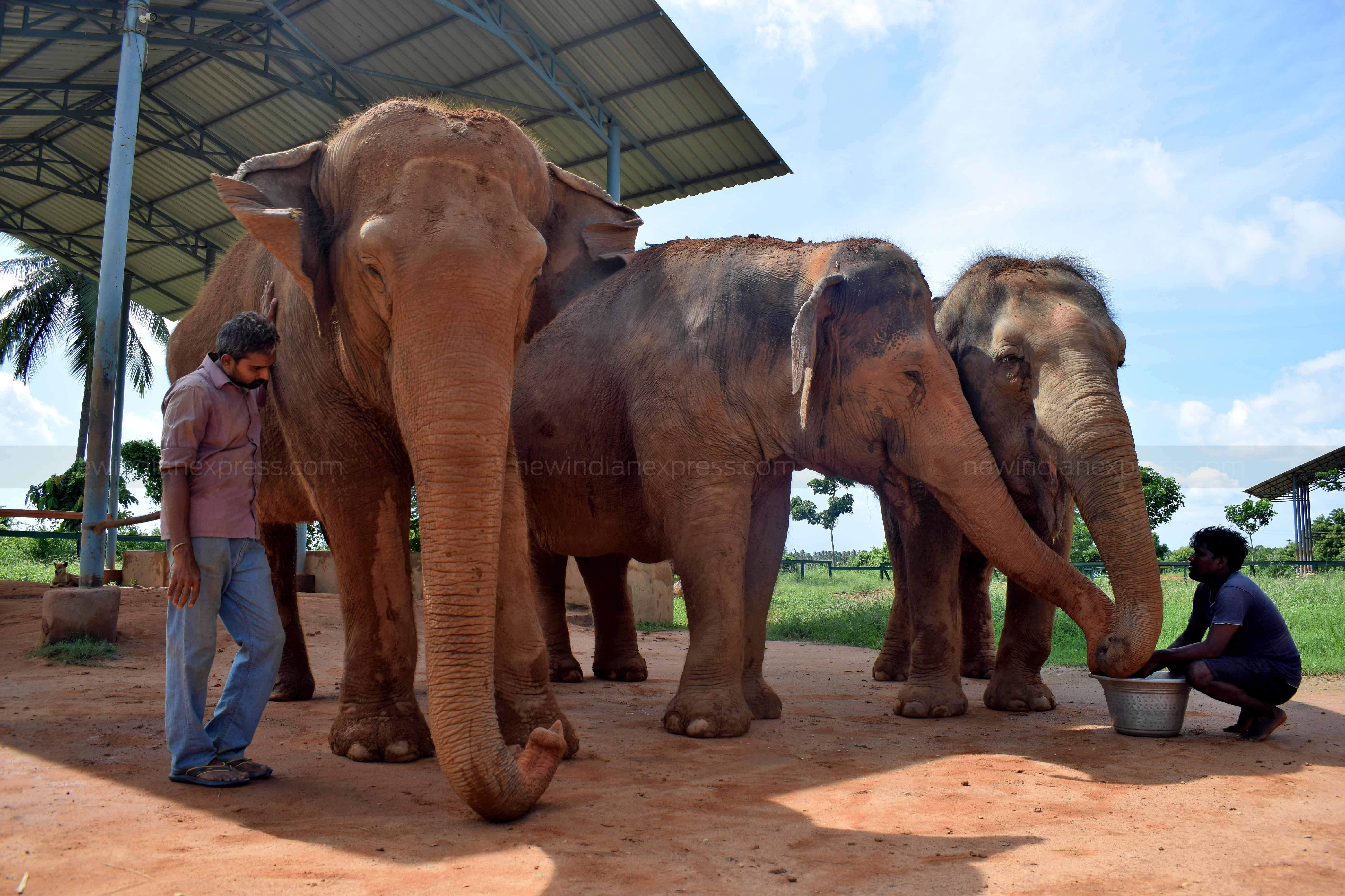 NGOs claim they were spending Rs 3.40 lakh per month operating ECF. The Kanchi mutt would send Rs 50,000 per month towards maintenance. As per the order from Chief Wildlife Warden, the Kanchi mutt will have to pay the annual maintenance charges to the District Forest Officer, Trichy Division.