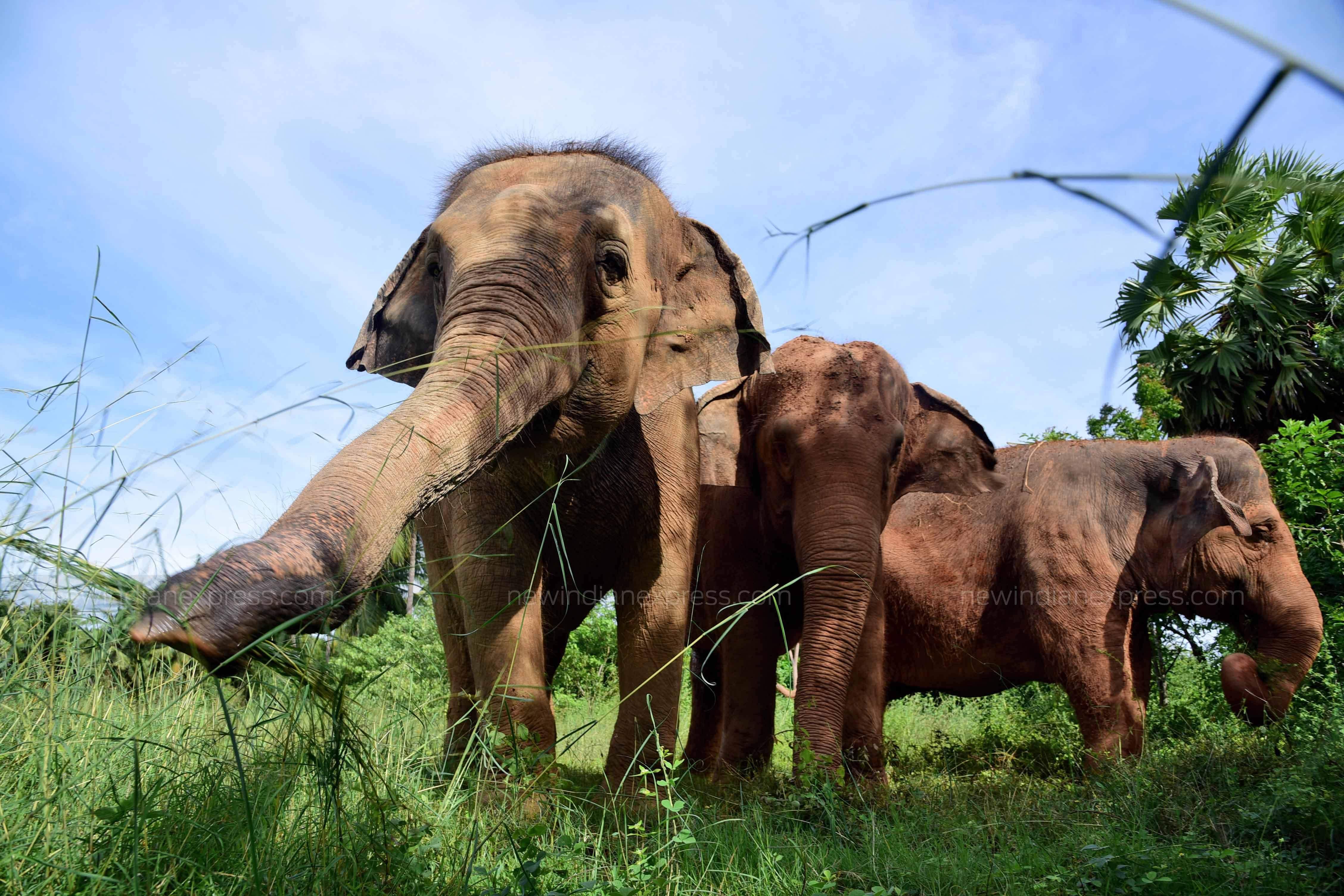 Elephants, Elephant Care Facility, Tree Foundation, Kanchi Kamakoti Peetam