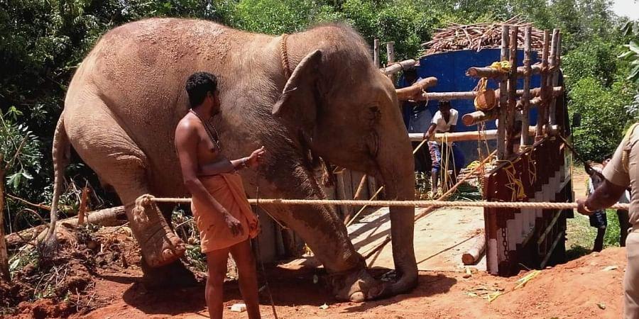 elephant, marakkanam, Kanchi mutt elephants