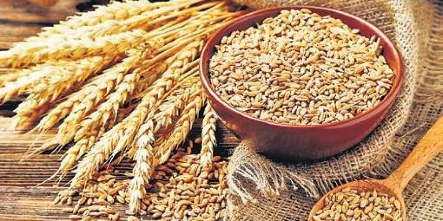 food grains, grains, wheat
