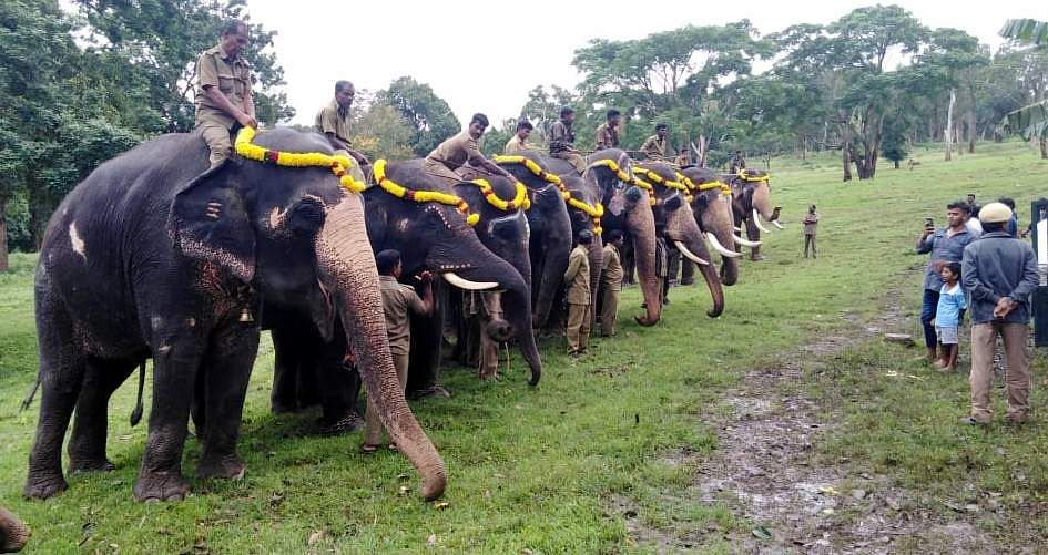 As part of Vinayagar Chaturthi, captive elephants are lined up at Theppakadu elephant camp in MTR in Nilgiris district. (Photo | EPS)