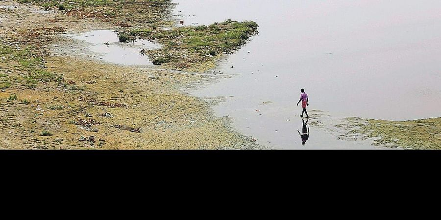 For the restoration project of the Yamuna's eastern bank, the DDA will seek the help of experts.