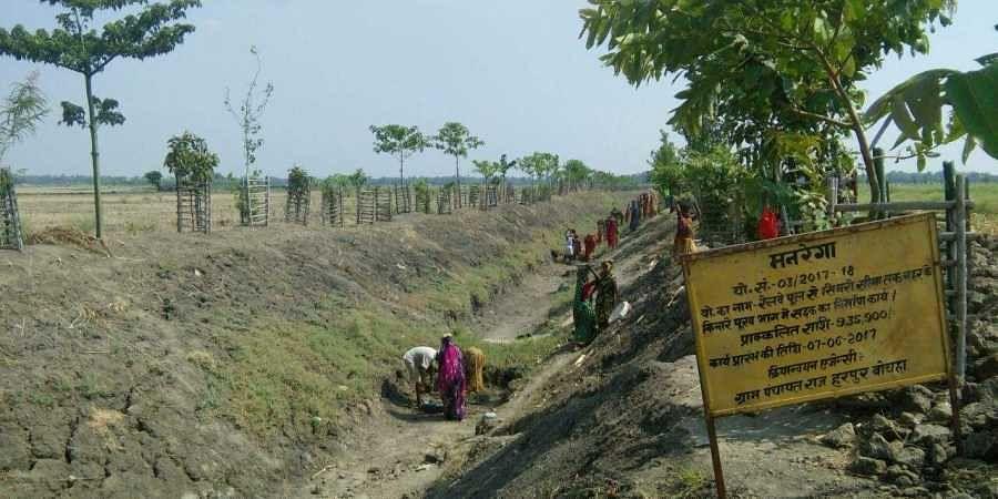 Harpur Bochanan Panchayat in Bihar's Samastipur is famous for its greenery