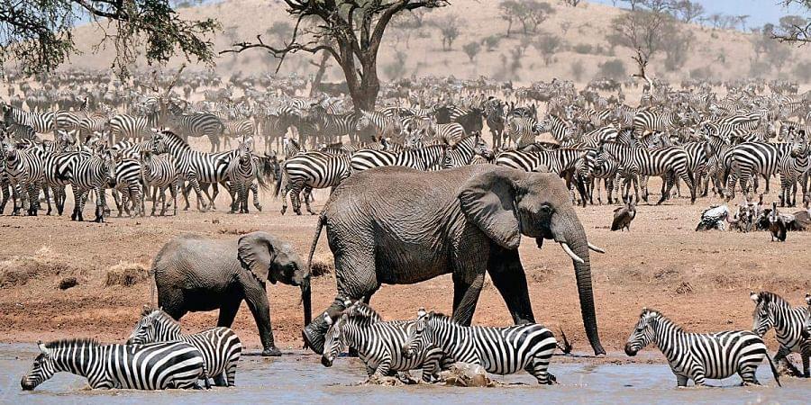 A still from 'Serengeti'.