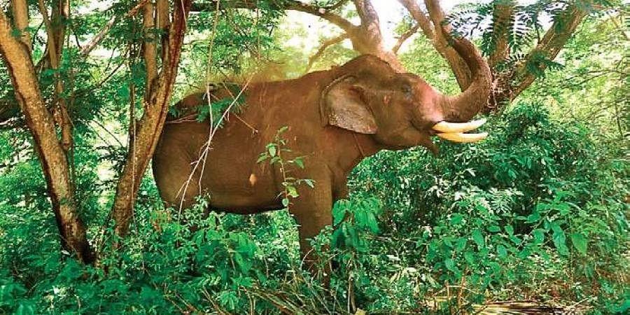 elephants, jumbos, man animal conflict