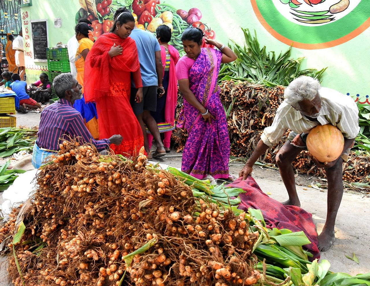 Fresh turmeric roots is another crop that is a very important and is must during the final day of Pongal.