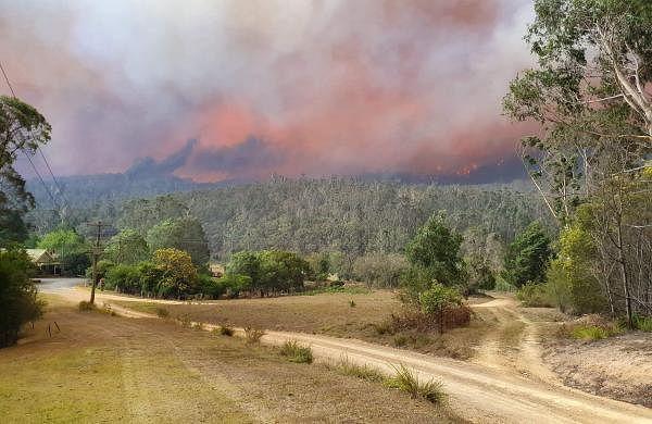 Australia to lose billions of dollars as massive bushfires deter tourists