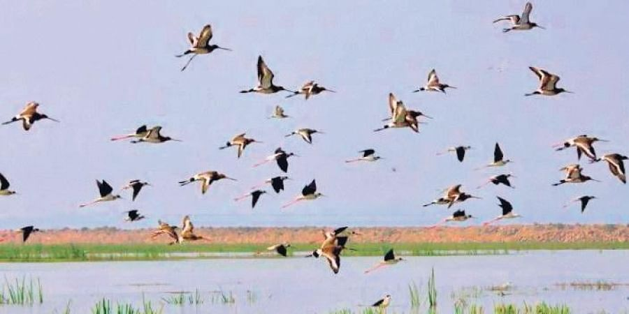 A record 28,569 water birds were counted during the Mahanadi River Waterbird Census - 2020 recently.
