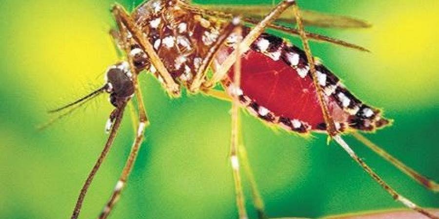 malaria parasite gene