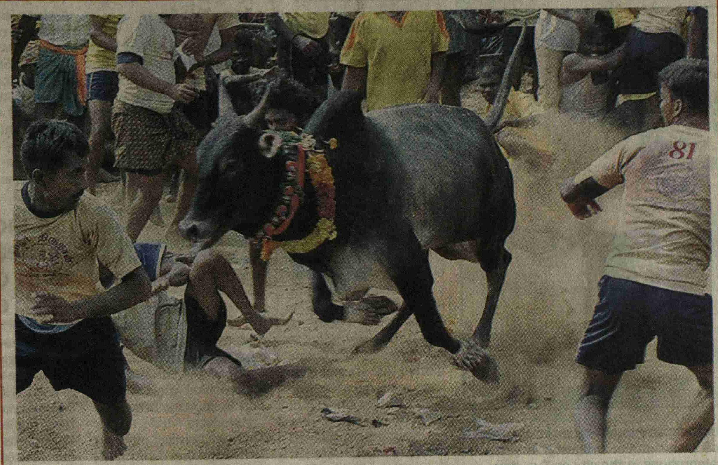 2007: Some running for safety, others trying to tackle a bull during the annual Jallikattu in Paalamedu near Madurai (Photo | EPS)