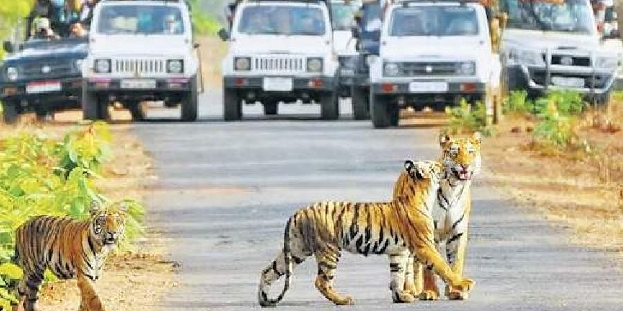 The Jim Corbett National Park is the oldest national park in India
