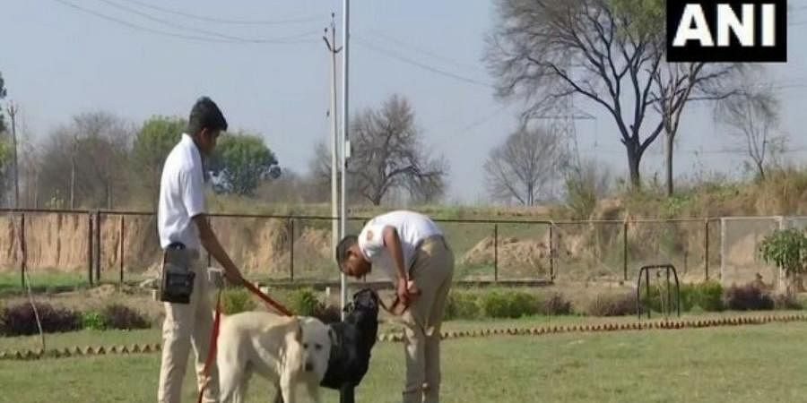 Dogs trained in Punjab, recover 300 kg poppy straw being smuggled via Kashmir.