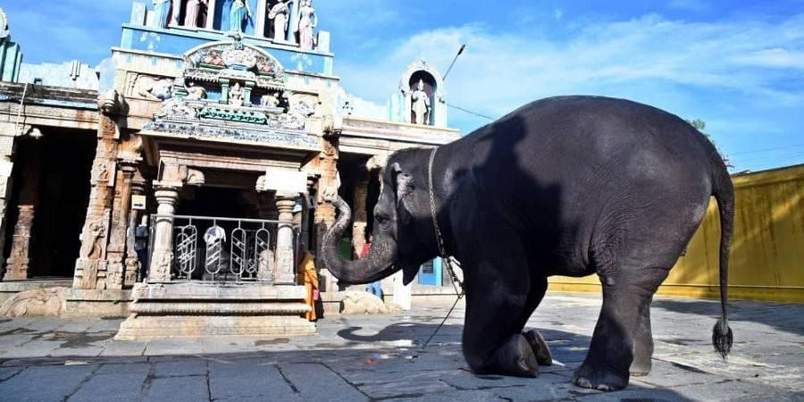 Kalyani, the elephant, at the Ambal Temple worships after places of worship were permitted to open in Tamil Nadu.