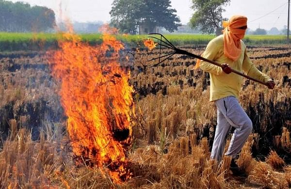 Stubble burning: Maximum cases in Punjab; anger over farm bills among major reasons