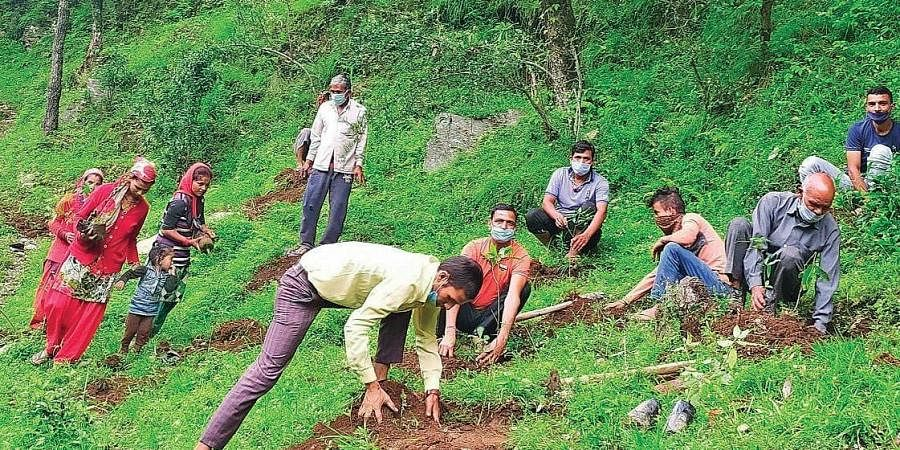 Chandan Nayal (R) has planted over 1 lakh trees out of which 10,000 survive in state's hill areas. (Photo   EPS)