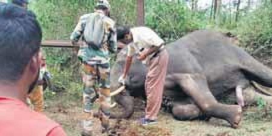 Forest department officials examine the carcass of the elephant which died in Bandipur Tiger Reserve on Tuesday