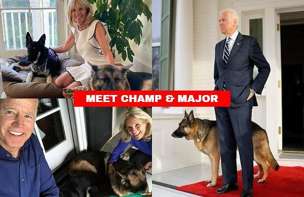 US President-elect Joe Biden's pet German Shepherd Major will be making history as the first rescue dog to live in the White House.
