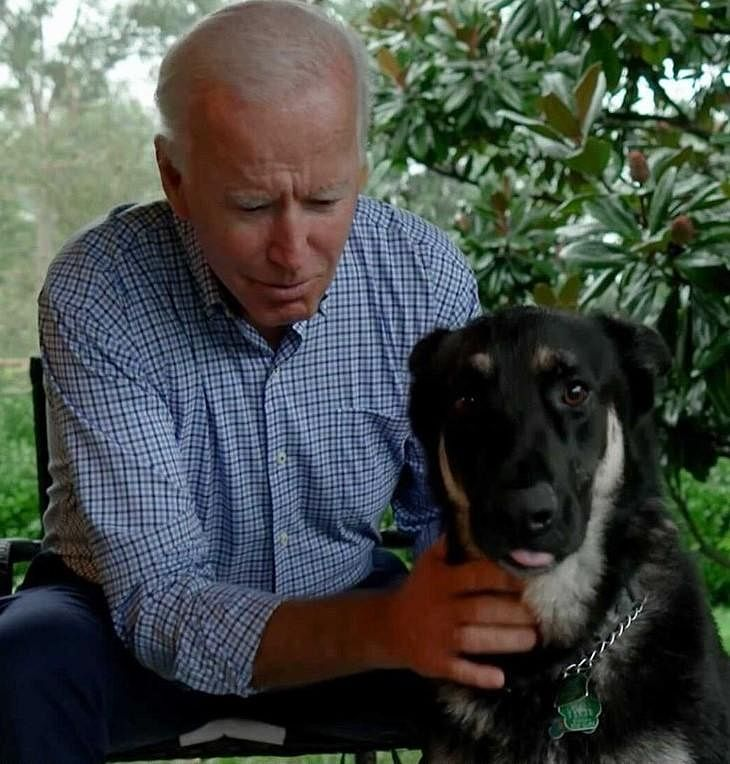 Though a Huffington Post report claims that 36th US President Lyndon B Johnson's dog Yuki as the first one.