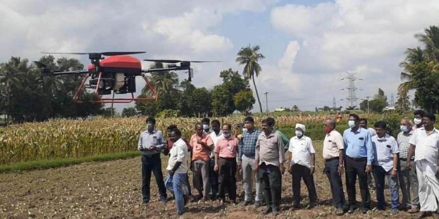 An expert team of Tamil Nadu Agriculture University use drones to study attack and control of fall army worm in maize. (Photo | Special Arrangement)