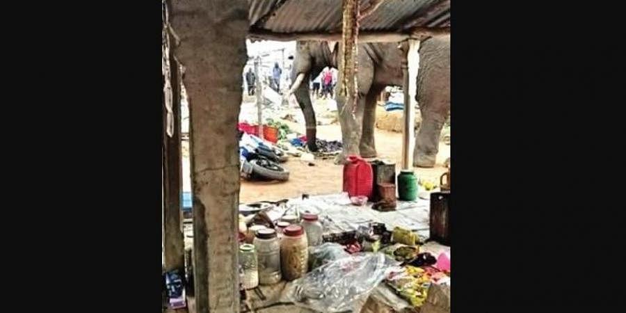 Tusker at weekly market
