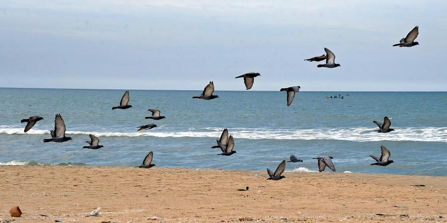 Flock of pigeons seen over Chennai's empty Marina Beach amidst Coronavirus pandemic which has resticted people from gathering out in large numbers. (Photo | Martin Louis, EPS)