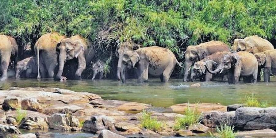 Shivalik Elephant Reserve