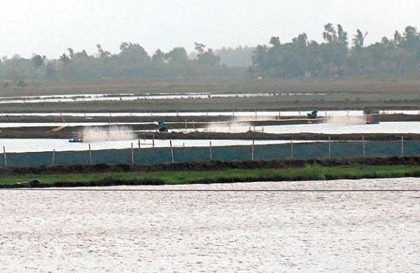 Illegal prawn farms face demolition in Kendrapara- The New ...