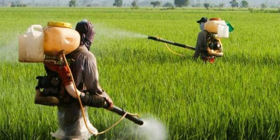 Farmers spraying pesticides in a field.