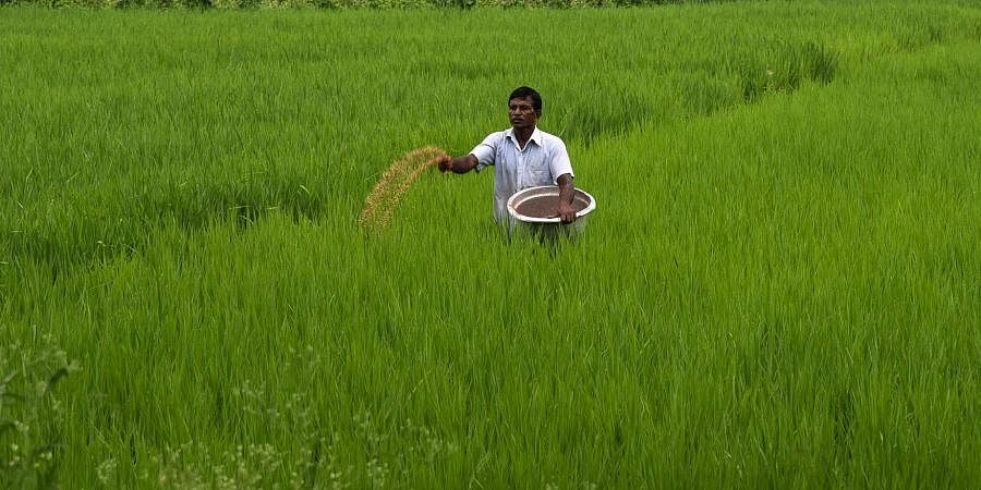 Farmers have requested the Agriculture department to make arrangements to stock more fertiliser in PACCS in adequate quantities to meet demand.