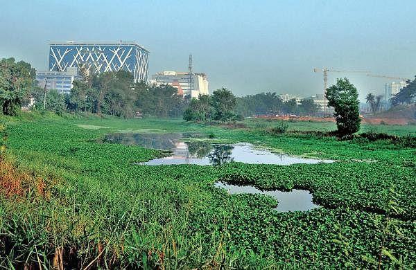 Waste dumping, salinity leave Kadambrayar high and dry
