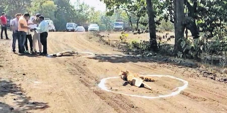 Police recreating the crime scene near Hamirpur forest in Chhattisgarh on Sunday.