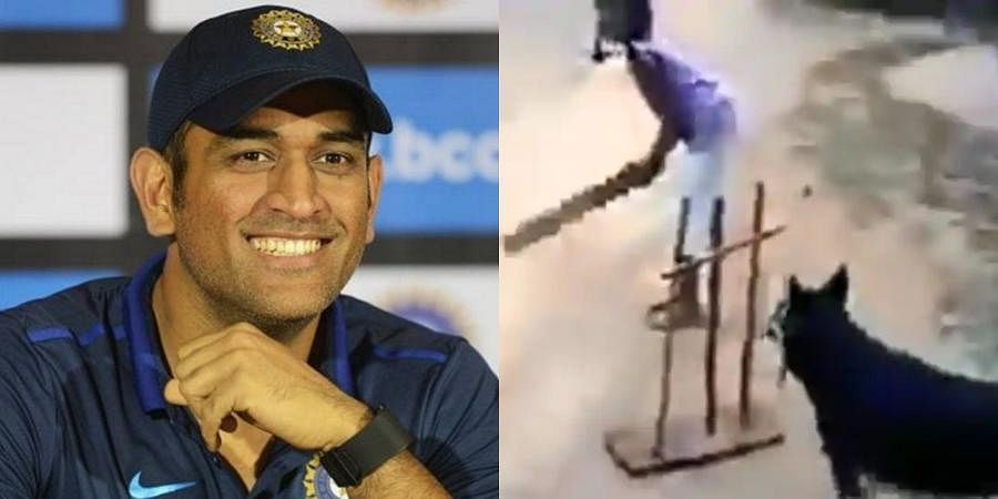 Indian cricketer MS Dhoni and a screengrab from a video where a dog can be seen playing cricket with children.