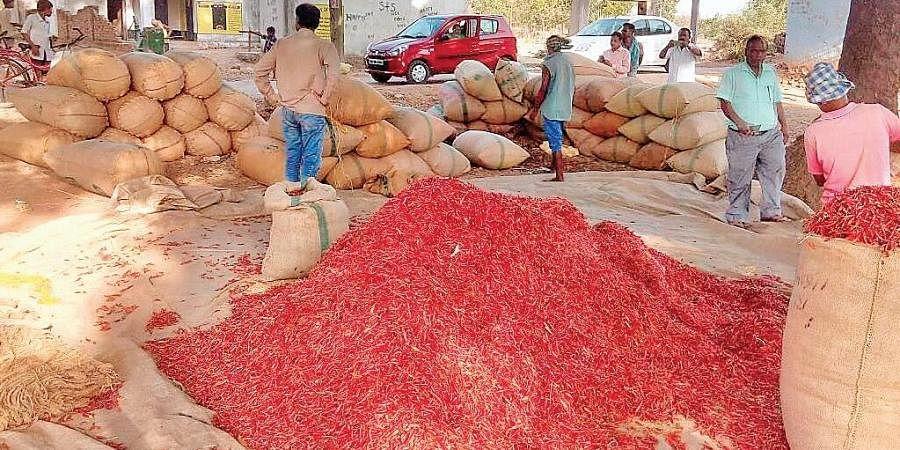 Chillies stocked in a market yard at Kuchinda