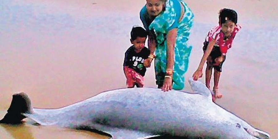 Visitors pose for photos near the carcass of a dead dolphin at Pentha beach within Gahiramatha Marine Sanctuary