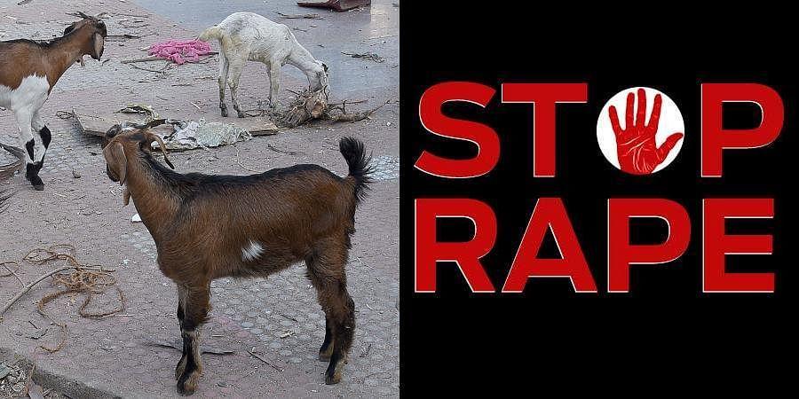 Goat Rape