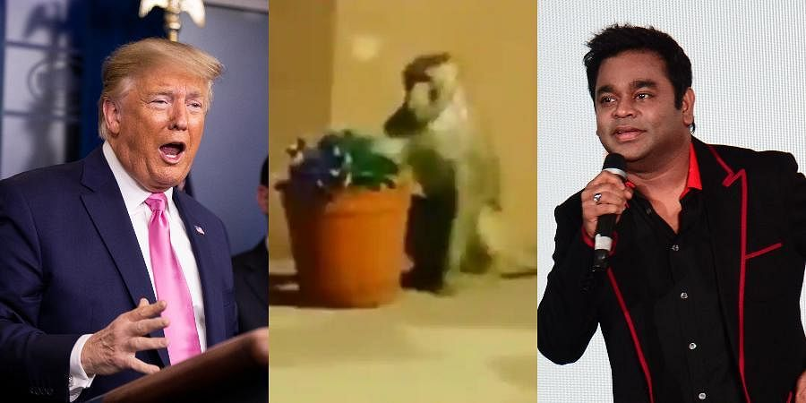 (From Left) Oscar-winning composer AR Rahman, a monkey and US President Donald Trump