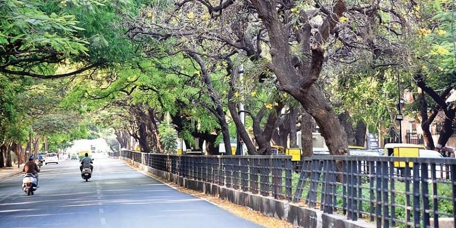 There was opposition from a section of Bengalureans against the cutting of 120 trees in Cubbon Park to make way for the elevated corridor.