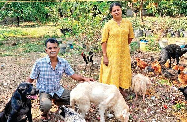 Foster home for abandoned canines