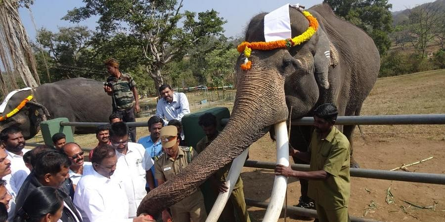 The elephants are maintained to assist the forest department in driving away wild elephants that enter into farmlands and human habitats.