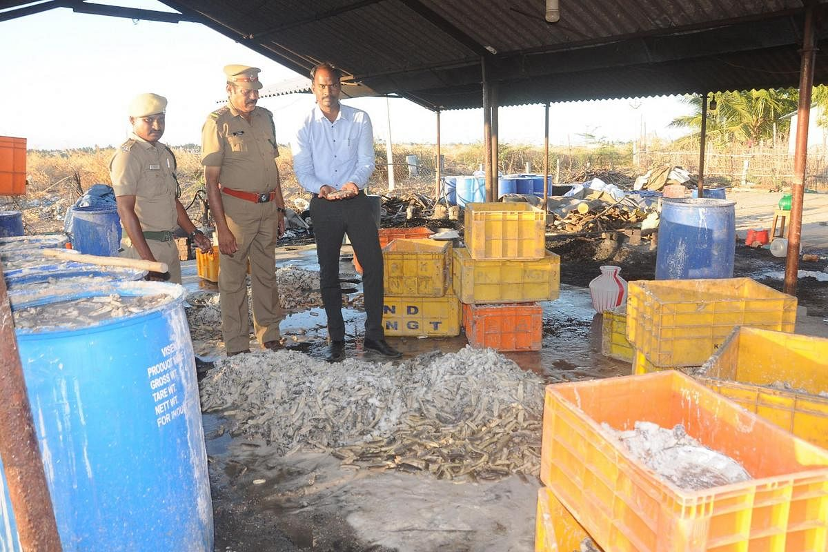 Over Five Tons Of Sea Cucumber Worth Several Crores Seized Near Nagai The New Indian Express
