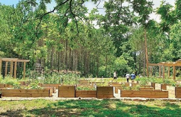 Building food forest for the family