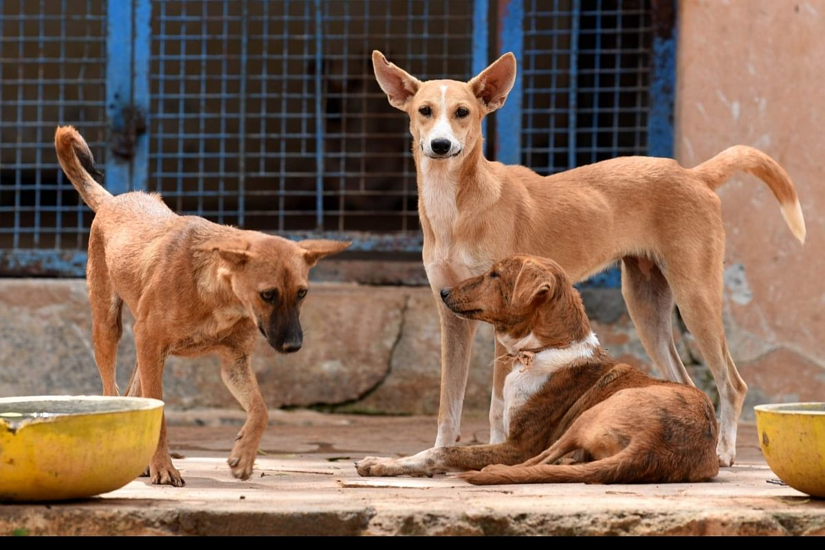 COVID-19 lockdown impact: Hundreds of abandoned animals die at Pakistan pet  markets- The New Indian Express