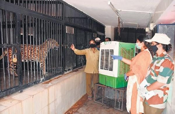 Hyderabad's Nehru zoo prepares to protect animals from lockdown, summer