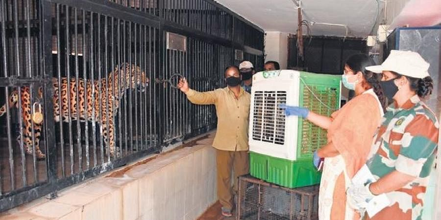 Workers put up air coolers in front of animal enclosures at the Nehru Zoological Park in Hyderabad on Sunday