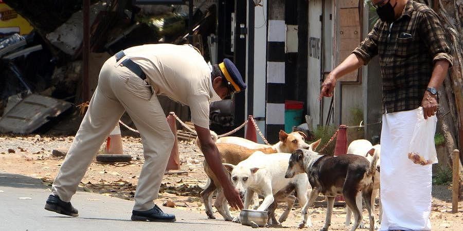 After the announcement of Chief Minister to look after the hunger needs of stray dogs police personnel in the city offering food to street dogs near South Beach in Kozhikode.