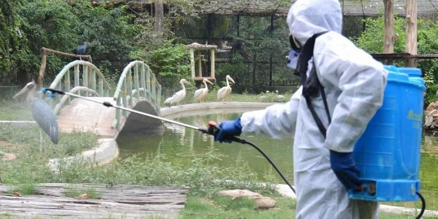 A health worker disinfects the Sanjay Gandhi Jaivik Udyan zoo area in wake of the coronavirus pandemic during the nationwide lockdown in Patna