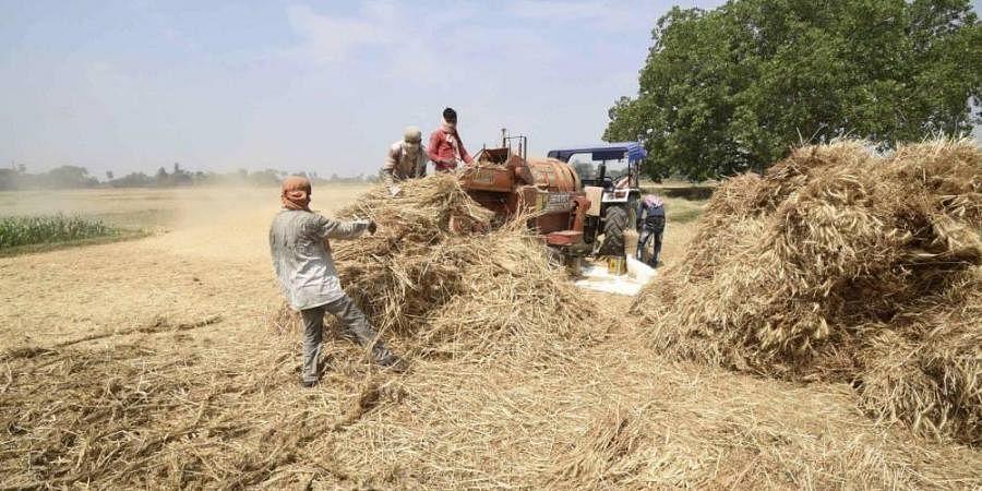 Patna farmers
