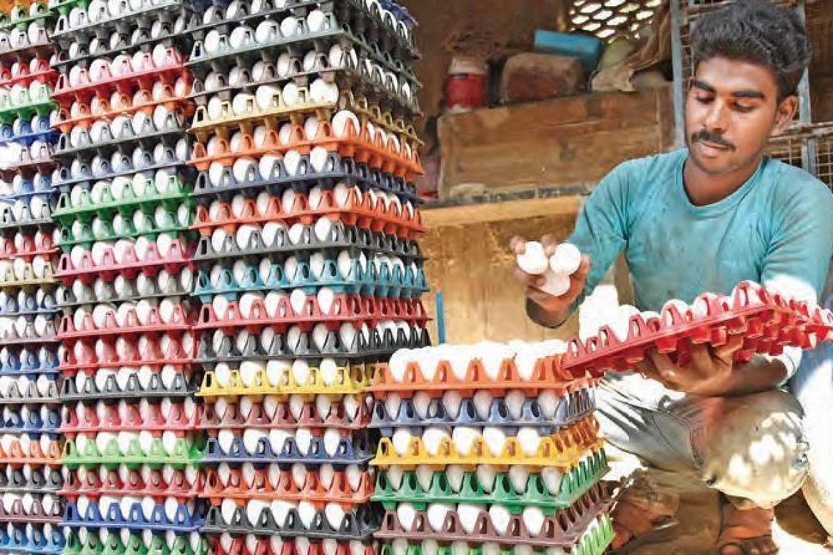 Egg Wholesale Price