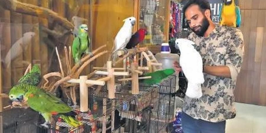 Pet Owners Facing A Tough Time Caring For Exotic Birds The New Indian Express
